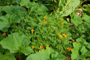 vegetable-flower-garden-cantaloupe-marigold_226e3768261fe09454889d0d38bc8281