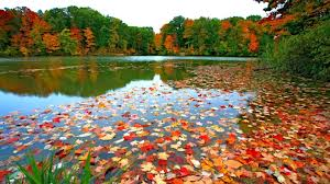 early fall leaves and pond